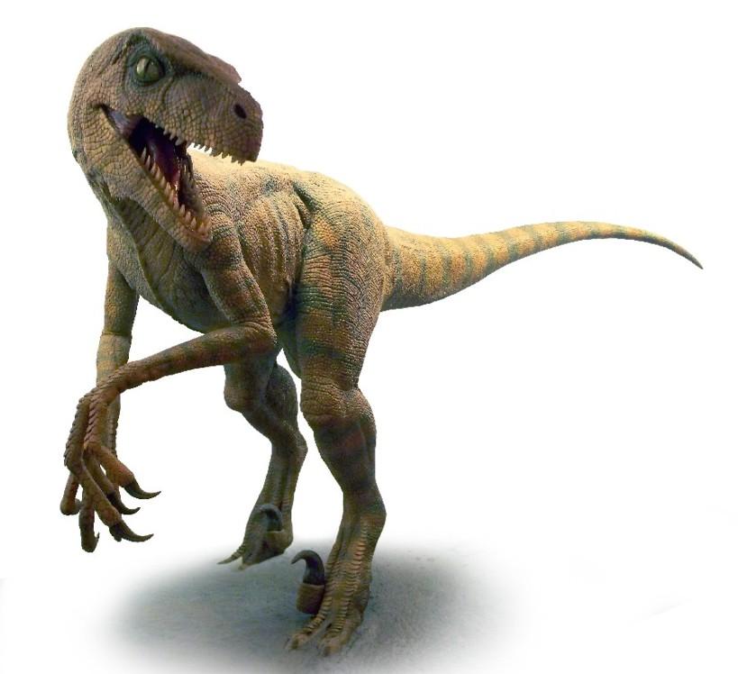 velociraptor_12_c4fd.jpg